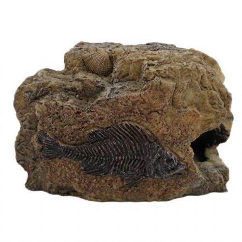 Betta Fossil Rock